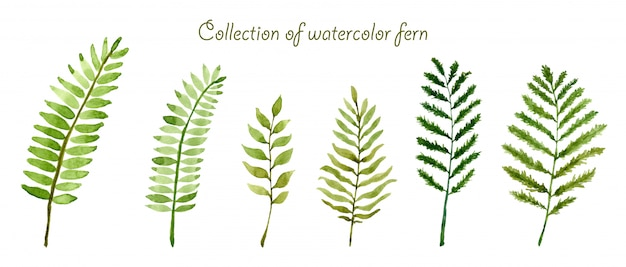 Set of collection watercolor fern Premium Photo
