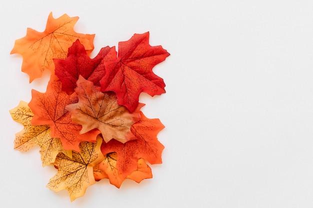 Набор осенних кленовых листьев Premium Фотографии