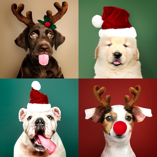 Set of portraits of adorable puppies in christmas costumes Free Photo