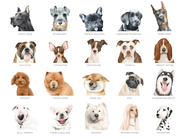 Set of watercolor dogs, 20 different breeds isolated Premium Photo