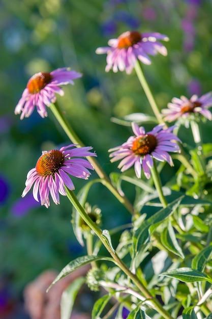 カモミールファミリーの花数本 Premium写真