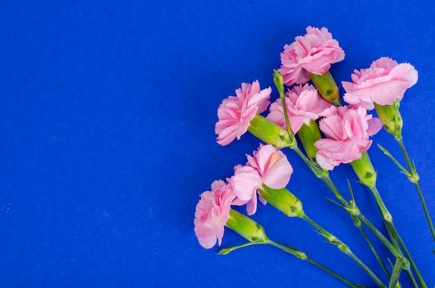 Several fresh pink carnations. photo Premium Photo
