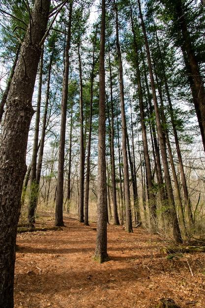 Diversi alberi ad alto fusto nella foresta Foto Gratuite