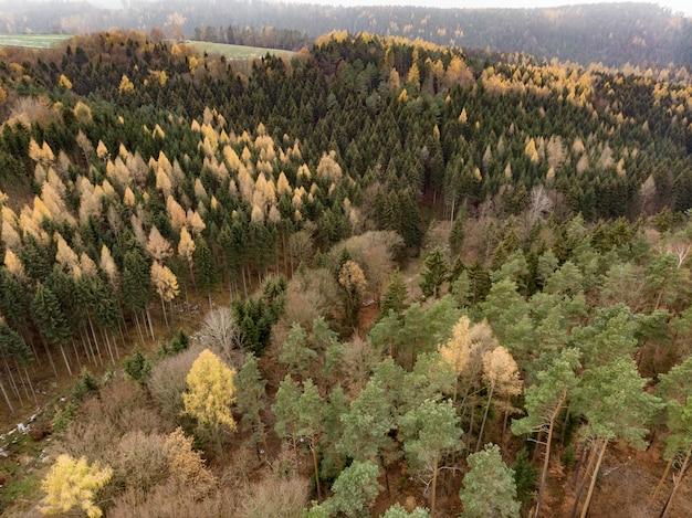 山に生えている複数の色合いのいくつかの木 無料写真