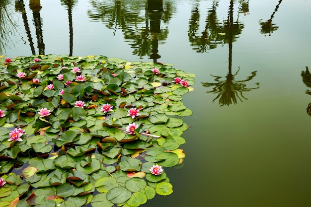 Seville maria luisa park gardens spain Premium Photo
