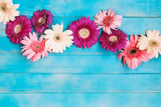 Shades of pink flowers on blue table photo free download shades of pink flowers on blue table free photo mightylinksfo