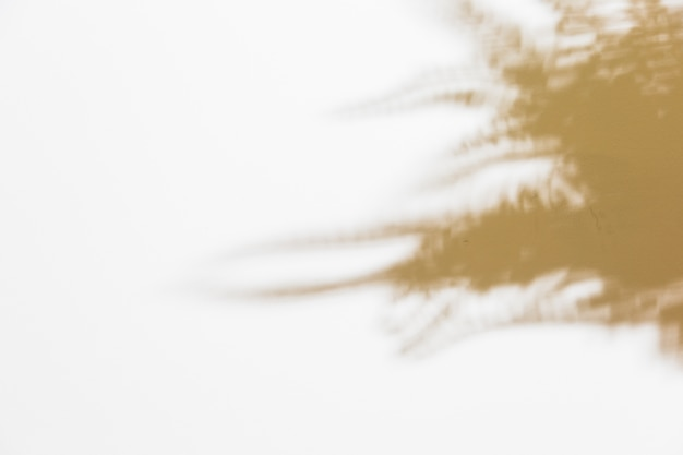 Shadow of blurred fern leaves on white backdrop Free Photo