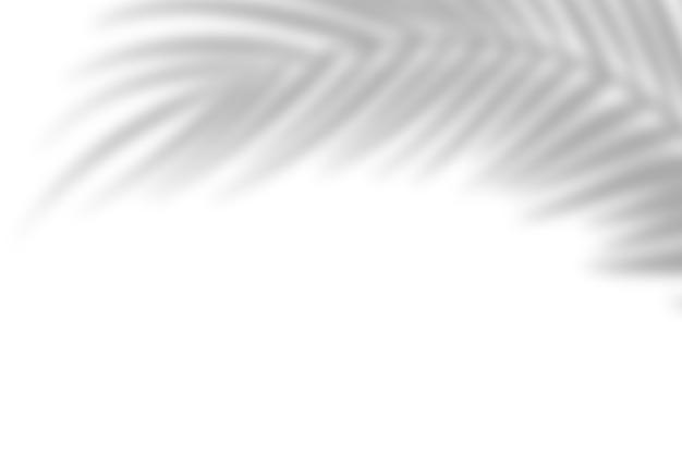 ヤシの影は白い壁の背景に残します。白い背景、段ボール。抽象的なイメージ。熱帯のコンセプト Premium写真