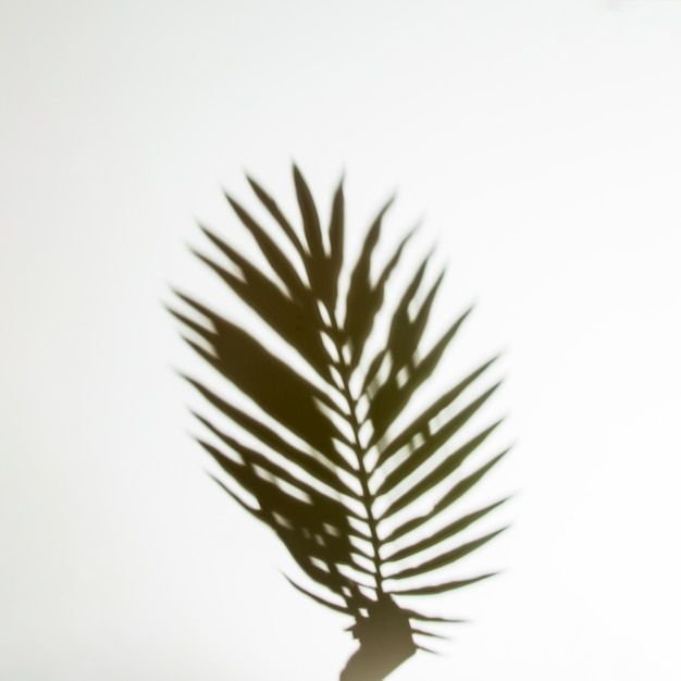 Shadow of hands holding palm leaf on white backdrop Free Photo