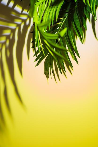 色付きの背景上の緑の葉の影 無料写真