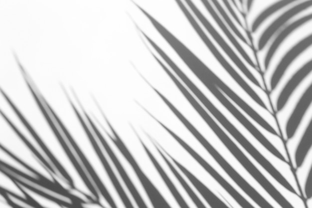 Premium Photo Shadow Overlay Effect Shadows From Palm Leaves And Tropical Branches On A White Wall In Sunlight All you have to do is to place the fall leaves png over your image. https www freepik com profile preagreement getstarted 9898443