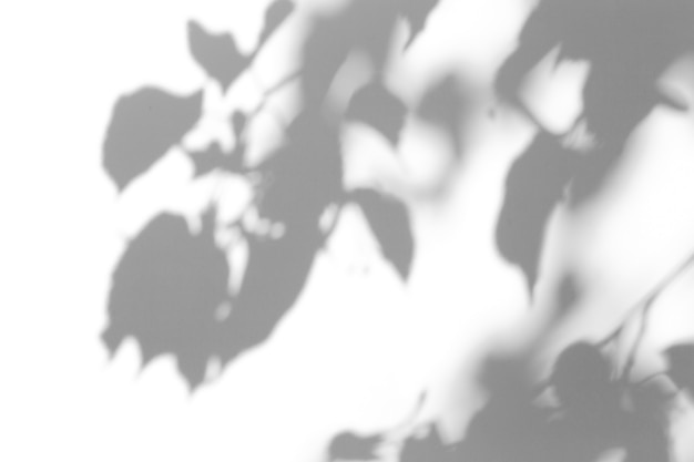 Shadow overlay effect. shadows from tree leaves and tropical branches on a white wall in sunlight. Premium Photo