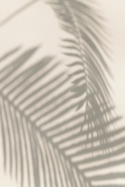 Shadow of palm leaves design element Free Photo