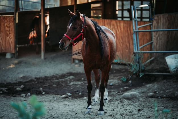 Shallow focus shot of a brown horse wearing a red harness Free Photo