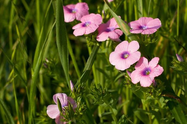 Неглубокий фокус розовых цветов Бесплатные Фотографии