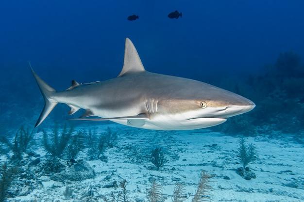 海のサメ 無料写真