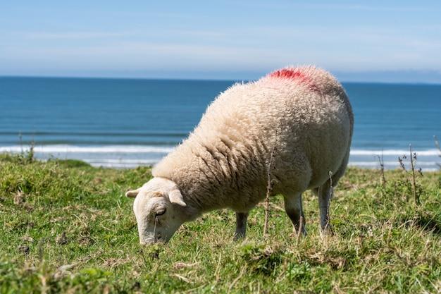 Sheep grazing in a green meadow Premium Photo