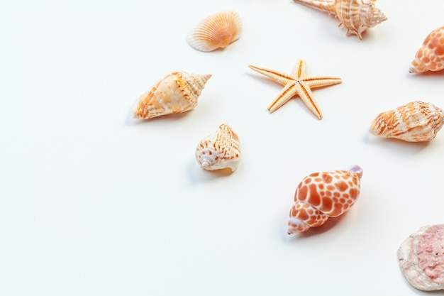 Shells isolated Premium Photo
