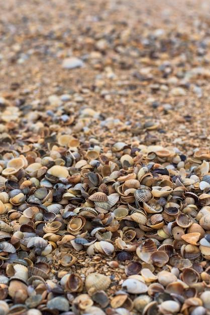 Shells on the shore, close-up Premium Photo