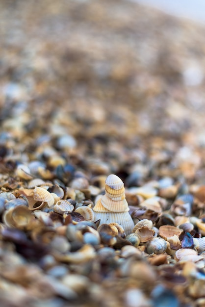 Shells on the shore, close-up Premium Photo