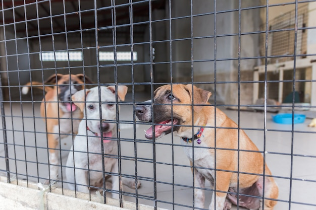 Shelter for homeless dogs, waiting for a new owner Premium Photo