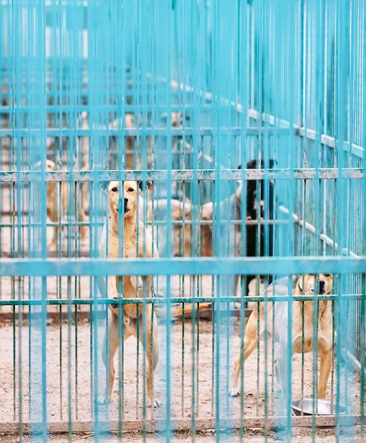 Shelter for stray dogs. Premium Photo