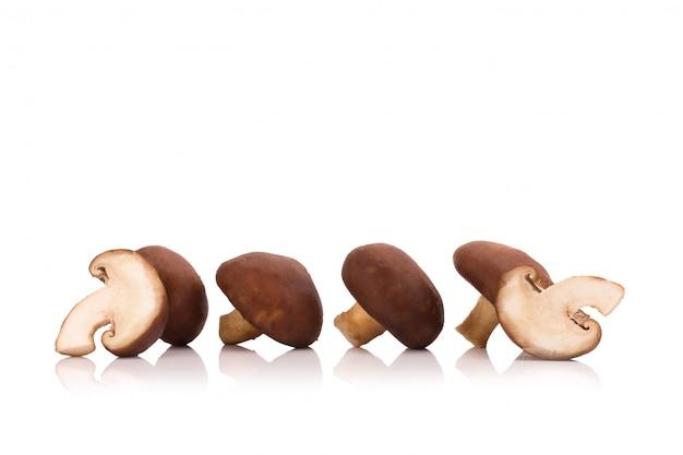 Shiitake mushrooms isolated on the white background Premium Photo