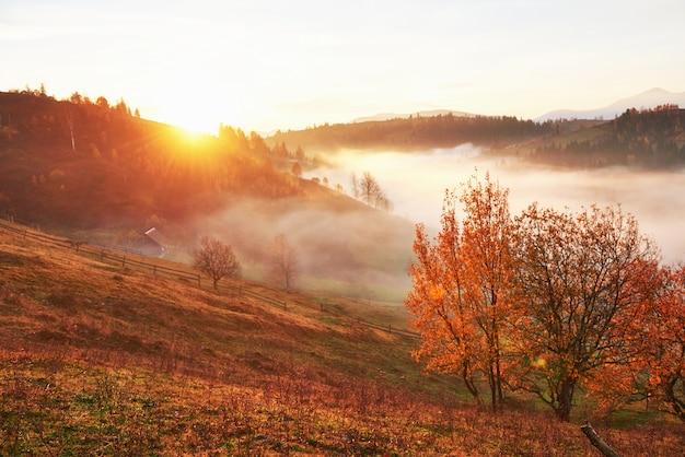Albero splendente sul pendio di una collina con travi soleggiate a valle di montagna ricoperta di nebbia. Foto Gratuite