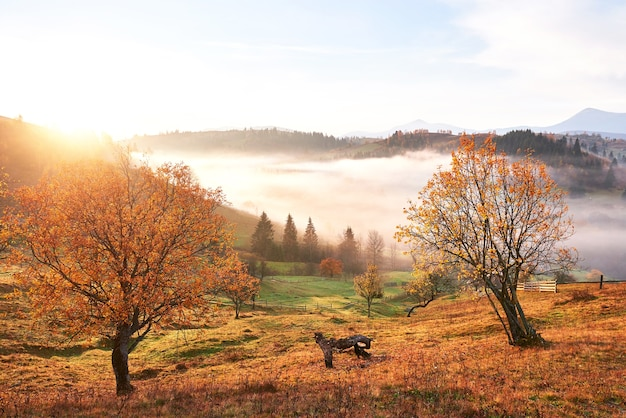 Shiny tree on a hill slope with sunny beams at mountain valley covered with fog. Free Photo