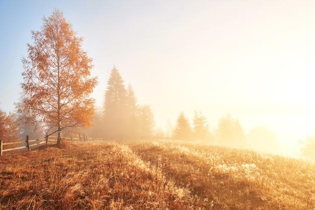 Блестящее дерево на склоне холма с солнечными лучами в горной долине, покрытой туманом. Бесплатные Фотографии
