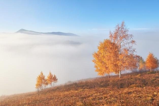 霧に覆われた山の谷の日当たりの良い梁と丘の斜面の光沢のある木。 無料写真