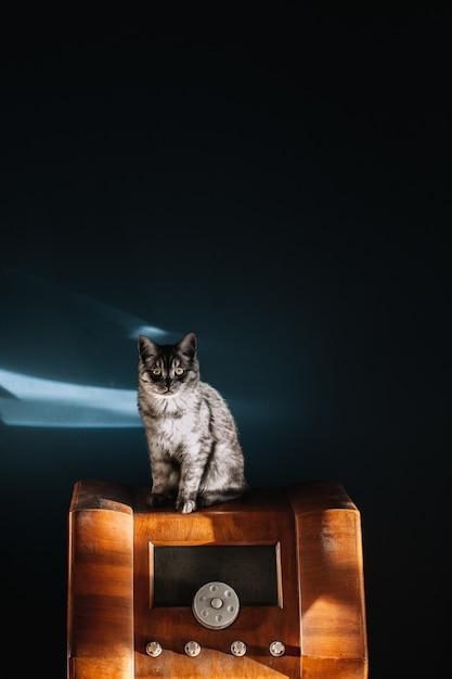 ヴィンテージの木製ラジオに座っている黄色い目を持つふわふわの灰色の美しい猫のショット 無料写真
