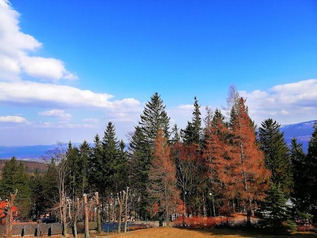 Выстрел из красных и зеленых деревьев в лесу в карпаче, польша Бесплатные Фотографии