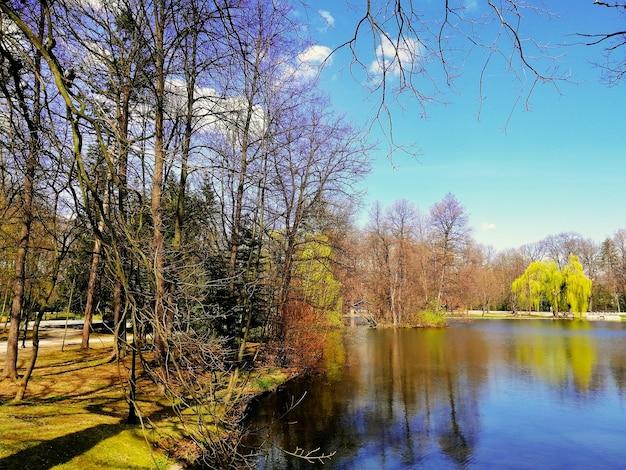 ポーランド、イェレニャグーラ公園の池の横にある木のショット 無料写真