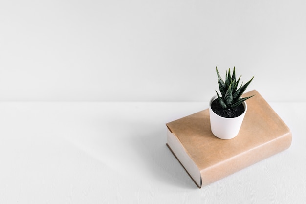 Showplant in white pot on brown book isolated on white background Free Photo