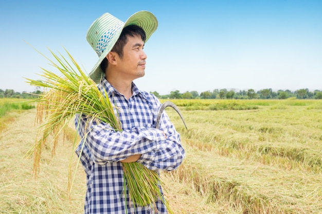 Side of asian young farmer happy harvest paddy rice in a green rice field and blue sky Premium Photo