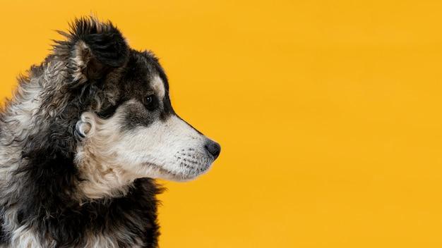 Боковой вид собака смотрит в сторону на желтом фоне Бесплатные Фотографии