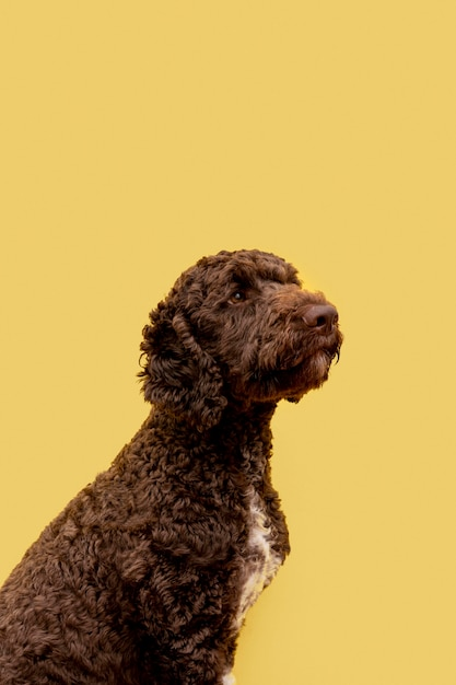 Cane barboncino domestico vista laterale Foto Gratuite