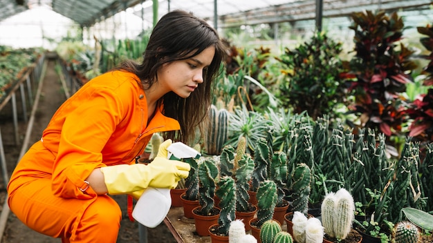 Side view of a female gardener spraying water on succulent plants Free Photo