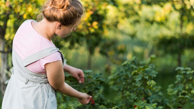 Side view girl picking fruits Free Photo