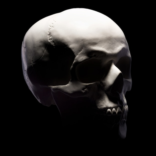 Side view of gypsum model of the human skull isolated on black Premium Photo