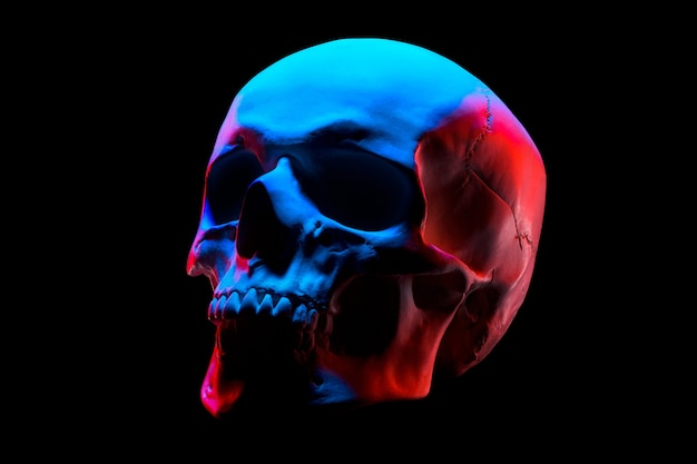Side view of gypsum model of the human skull in neon lights isolated on black background with clipping pat Premium Photo