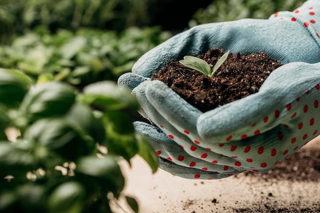 Vista laterale delle mani con guanti che tengono terreno e pianta Foto Gratuite
