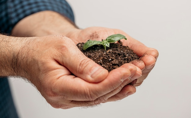 Side view of male hands holding soil and growing plant Free Photo