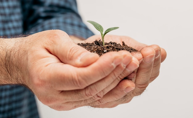 Side view of male hands holding soil and little plant Free Photo