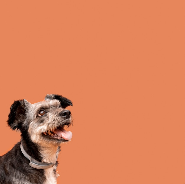 Очаровательный щенок смешанной породы, вид сбоку, глядя вверх с копией пространства Бесплатные Фотографии