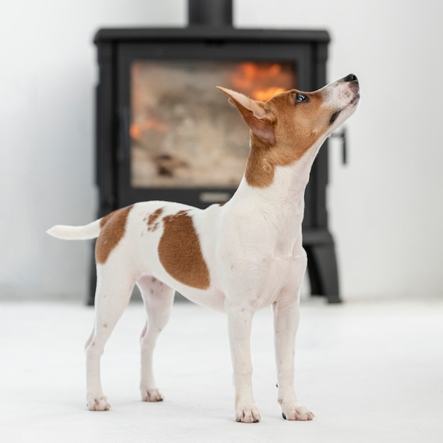 Взгляд со стороны милой собаки смотря вверх Бесплатные Фотографии