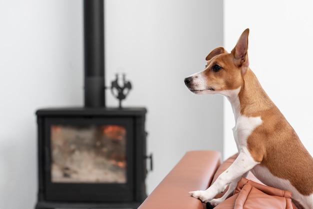 Вид сбоку собаки на диване с расфокусированным камином Бесплатные Фотографии