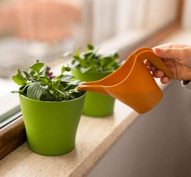小さな子供の水やり植物の側面図 無料写真