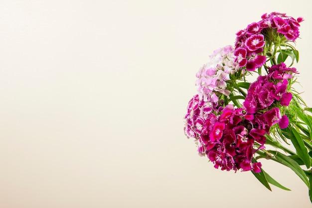 Вид сбоку фиолетового цвета сладкого уильям или турецкой гвоздики цветы на белом фоне с копией пространства Бесплатные Фотографии
